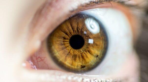 iris recognition biometric identification management